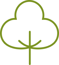 bawełna (ang. cotton)
